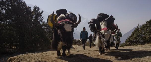 Sherpa (2015) | Best Documentary | LFF 2015 | Grierson Award